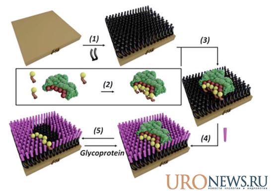 Разработан сенсорный чип для диагностики рака простаты