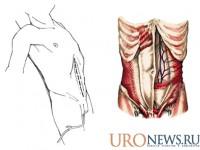 Болезнь Пейрони. Методика корпоропластики с применением фрагмента влагалища прямой мышцы живота