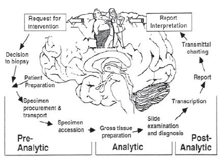 Рис. 2 Схема работы стандартной патоморфологической лаборатории
