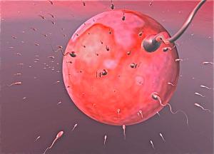 Молекула улучшит качество спермы!