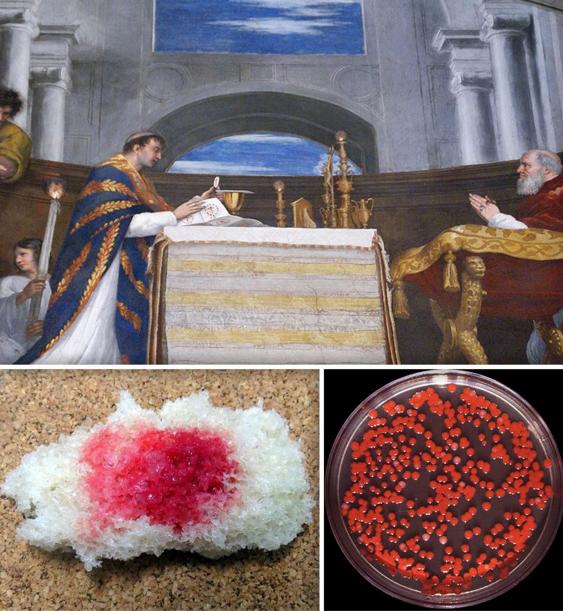 """Сверху: фрагмент картины Рафаэля """"Больсенская месса"""", Ватикан, 1512 год. Изображено чудо, имевшее место в 1263 году. По дороге в Рим проезжий священник из Чехии, не верующий в чудо пресуществления хлеба и вина в тело и кровь Христа, совершал богослужение в итальянском городе Больсена. Вдруг опреснок (хлебец) для причащения окрасился кровью, закапавшей плат, на котором раскладывают опресноки. Специальной буллой папа Урбан IV провозгласил в честь этого чуда новый праздник - Тела Христова - поныне нерабочий день в католических странах. Внизу слева: кусок хлеба, окрашенный """"бациллами чудесной крови"""" Serratia marcescens, с которыми работали Флюгге и Лащенков.  Внизу справа: культура бацилл Serratia marcescens в чашке Петри. Такие чашки с агар-агаром использовались в опытах с этим бациллами для выяснения механизма воздушно-капельного пути распространения инфекций."""