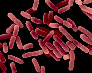 Урогенитальная инфекция и ее профилактика в андрологии