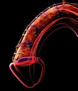 Эректильная дисфункция — нераспознанные нейрогенные факторы