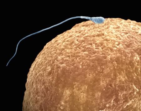 Продукты влияющие на показатели спермограммы